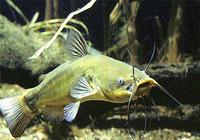 夏季钓鲶鱼时用饵思路及渔具技巧