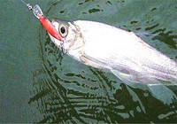 夏季钓鱼之路亚钓鱼技巧