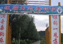 红庙生态垂钓园