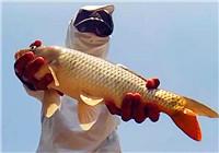 《钓鱼实战》 第40期 麦子作钓杭州湾,湿地公园狂拔鲤鱼
