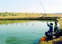 夏季釣魚技巧之釣位選擇技巧