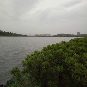 增城挂绿湖