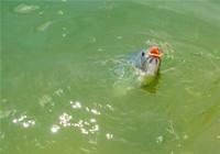 传统钓草鱼如何制作线组、浮漂