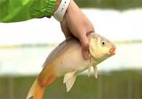 鲤鱼至少钓了三十年:四月只要用这钓法 上鱼是真的快!