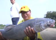 《猎青》第二季 第28集 东莞晟源战大青 避鲢鳙获30斤巨物