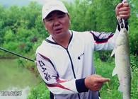 《钩尖江湖》第三季 第10集 看崔哥使用散饵作钓是否能够成功避开鲢鱼?