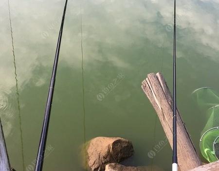 运气好,野塘擒大草。 自制饵料钓鲤鱼