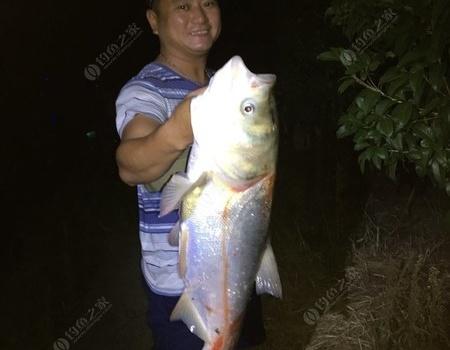 臺風天也阻擋不了釣魚人的熱情 老鬼餌料釣鰱鳙魚