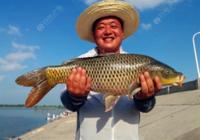两款钓受惊鲤鱼的饵料配方