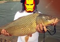 秋季钓鲤鱼饵料成分的变化