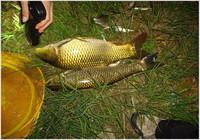 夜钓技巧分享,学会不再担心没有鱼!