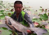 《游钓中国》第四季  第32集  岛钓再战太白湖 九米长竿挑大青